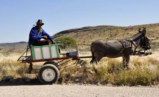 Man Riding on Carriage Pulled by Donkey
